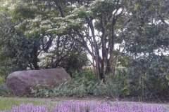 pianeta-rurale-piante-e-fiori-1