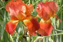 pianeta-rurale-piante-e-fiori-100