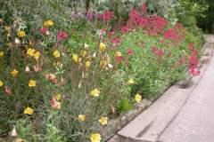 pianeta-rurale-piante-e-fiori-102