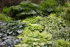 pianeta-rurale-piante-e-fiori-104