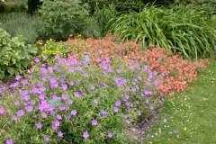pianeta-rurale-piante-e-fiori-105