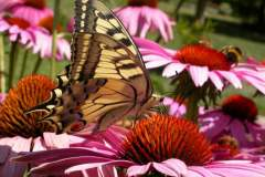 pianeta-rurale-piante-e-fiori-113