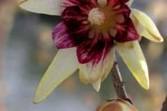 pianeta-rurale-piante-e-fiori-115