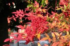 pianeta-rurale-piante-e-fiori-116