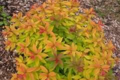pianeta-rurale-piante-e-fiori-120
