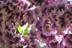 pianeta-rurale-piante-e-fiori-121