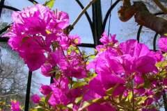 pianeta-rurale-piante-e-fiori-122