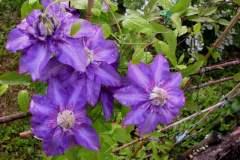 pianeta-rurale-piante-e-fiori-124
