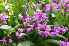 pianeta-rurale-piante-e-fiori-125