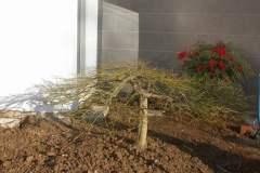 pianeta-rurale-piante-e-fiori-129