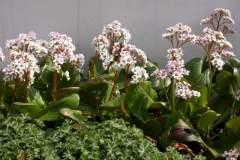 pianeta-rurale-piante-e-fiori-130