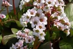 pianeta-rurale-piante-e-fiori-131