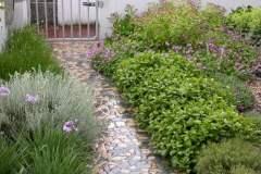 pianeta-rurale-piante-e-fiori-134