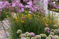 pianeta-rurale-piante-e-fiori-135