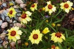 pianeta-rurale-piante-e-fiori-136