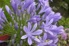 pianeta-rurale-piante-e-fiori-137
