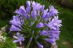 pianeta-rurale-piante-e-fiori-138