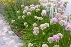 pianeta-rurale-piante-e-fiori-139