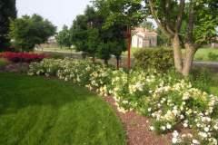pianeta-rurale-piante-e-fiori-14