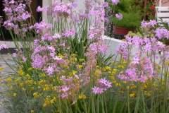 pianeta-rurale-piante-e-fiori-141