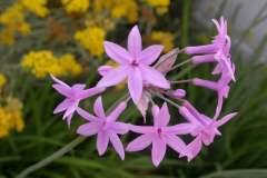 pianeta-rurale-piante-e-fiori-142