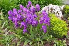 pianeta-rurale-piante-e-fiori-146