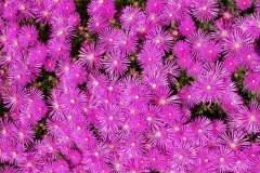 pianeta-rurale-piante-e-fiori-147