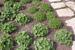 pianeta-rurale-piante-e-fiori-148