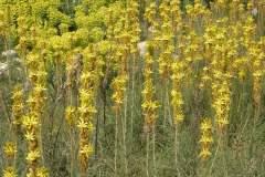 pianeta-rurale-piante-e-fiori-149