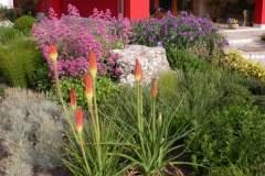 pianeta-rurale-piante-e-fiori-151