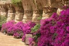 pianeta-rurale-piante-e-fiori-154