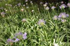 pianeta-rurale-piante-e-fiori-155