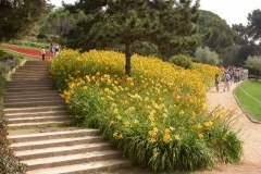 pianeta-rurale-piante-e-fiori-156