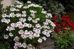pianeta-rurale-piante-e-fiori-159