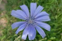 pianeta-rurale-piante-e-fiori-16