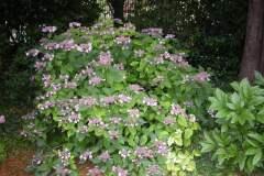pianeta-rurale-piante-e-fiori-160