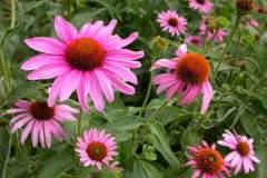pianeta-rurale-piante-e-fiori-162