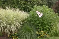 pianeta-rurale-piante-e-fiori-163