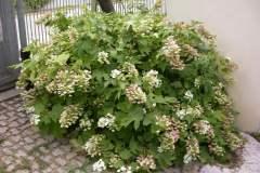 pianeta-rurale-piante-e-fiori-164