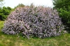 pianeta-rurale-piante-e-fiori-165