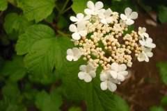 pianeta-rurale-piante-e-fiori-166