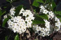 pianeta-rurale-piante-e-fiori-167