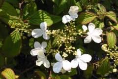 pianeta-rurale-piante-e-fiori-168