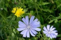 pianeta-rurale-piante-e-fiori-17