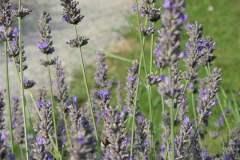 pianeta-rurale-piante-e-fiori-18