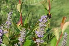 pianeta-rurale-piante-e-fiori-19