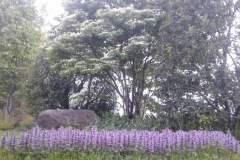 pianeta-rurale-piante-e-fiori-2