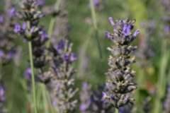 pianeta-rurale-piante-e-fiori-20