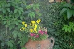 pianeta-rurale-piante-e-fiori-22
