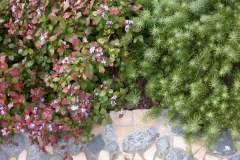 pianeta-rurale-piante-e-fiori-43